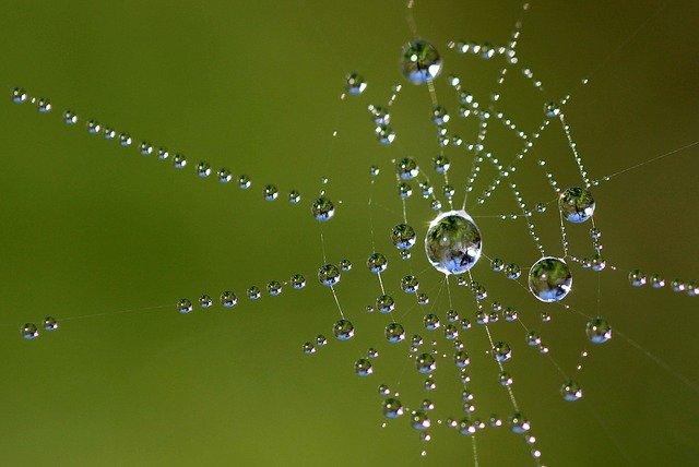 mirror web